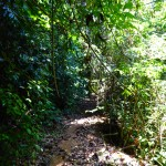 Co_tu_jungle_trekking (28)