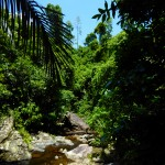 Co_tu_jungle_trekking (31)